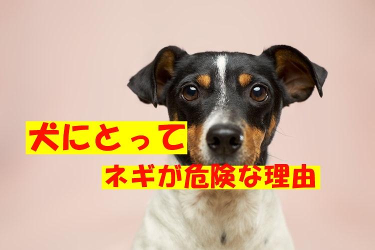 犬にとってネギが猛毒なのはなぜ?理由や起こる中毒症状とは?