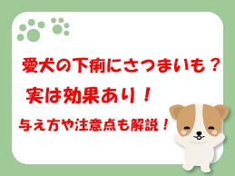 犬が下痢した時さつまいもは効果がある?与える注意点や疑問点も解説!