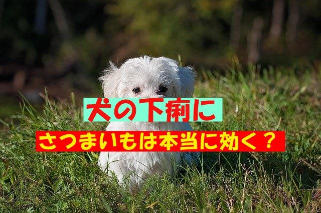 犬が下痢した時にさつまいもで治るのはホント?疑問点も解説!
